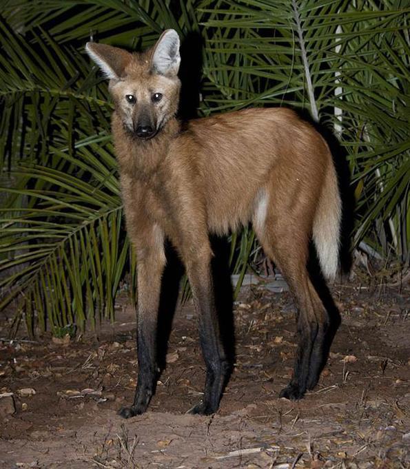 自然界中最怪的动物