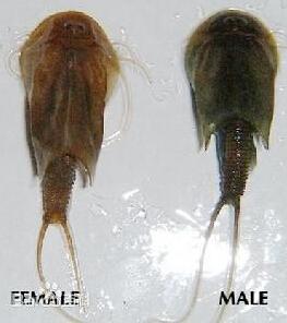 最古老的生物_引起阴茎头包皮炎的四大病毒伤害
