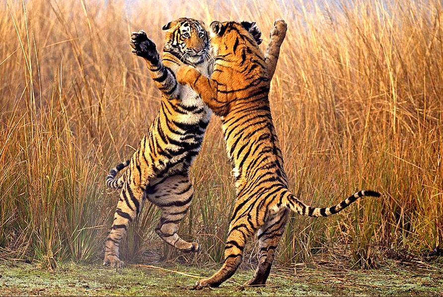 两只老虎吉他谱
