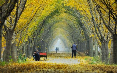 美丽村庄道路效果图-合肥最美乡村公路 2 图片 合肥最美乡村公路 2 图片大全 社会热点图片