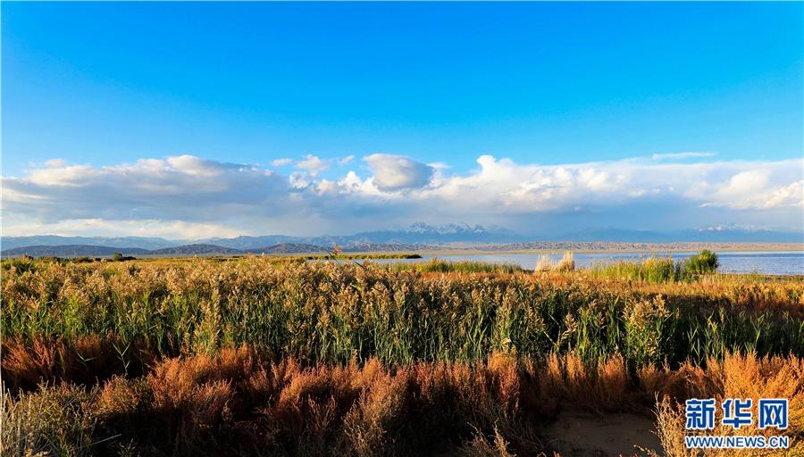 每年的九,十月份,青海省海西州蒙古族藏族自州迎来了一年中最美的季节