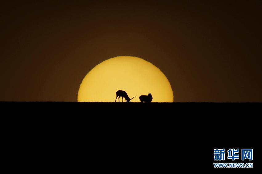 光影可可西里:白天不懂夜的美