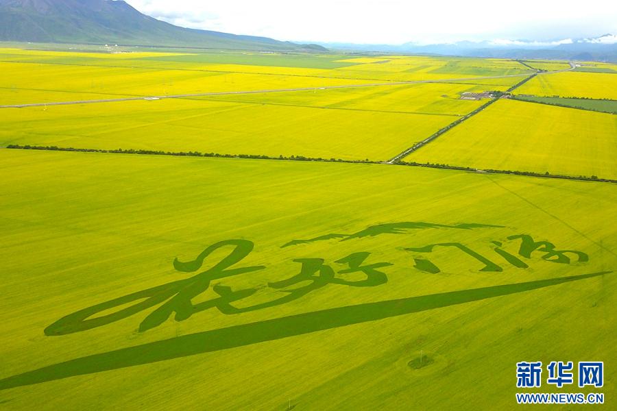 壁纸 草原 成片种植 风景 植物 种植基地 桌面 900_600
