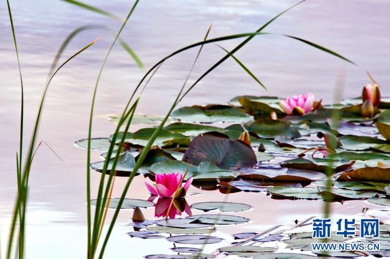 夏季,贵德县境内的千姿湖国家湿地公园风景如画.