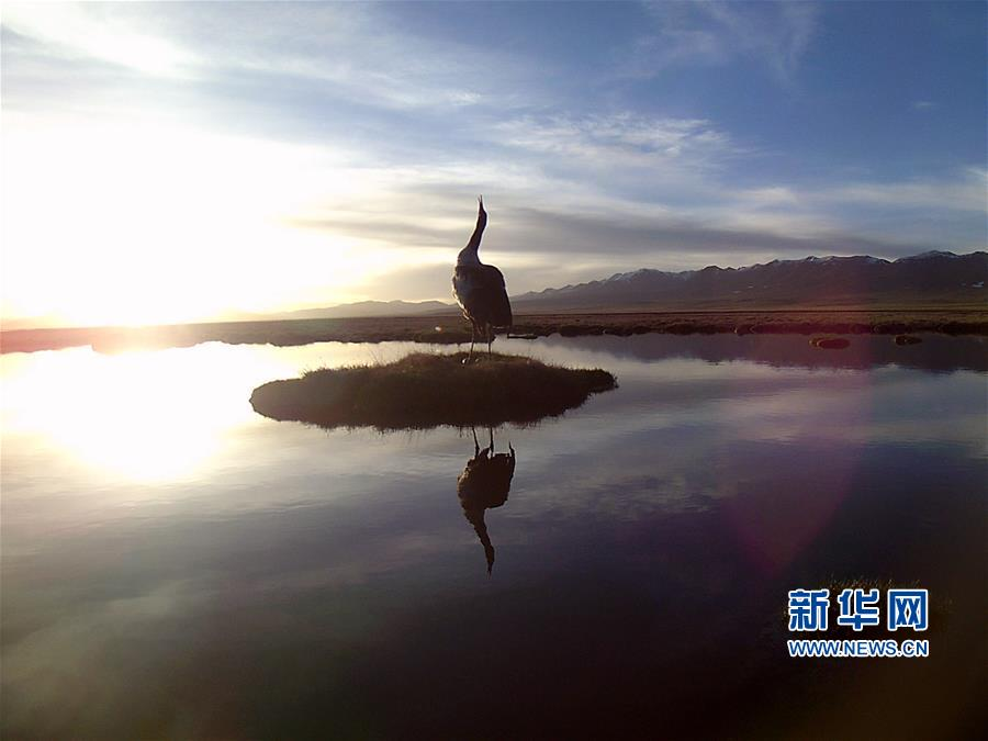 (图文互动)(1)青海祁连山地区首次采集到黑颈鹤孵化影像