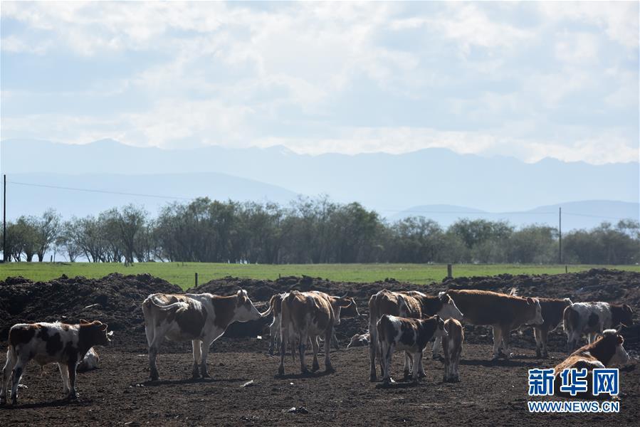 (环境)(2)生态牧场助力牧户增收