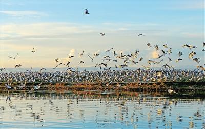 青海湖, 茫茫天地的别样浪漫