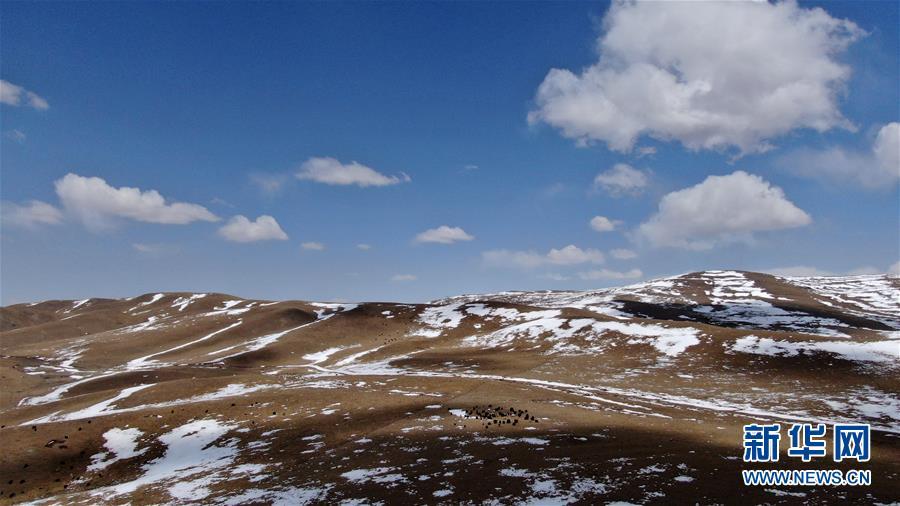 (环境)(1)雪后的金银滩草原