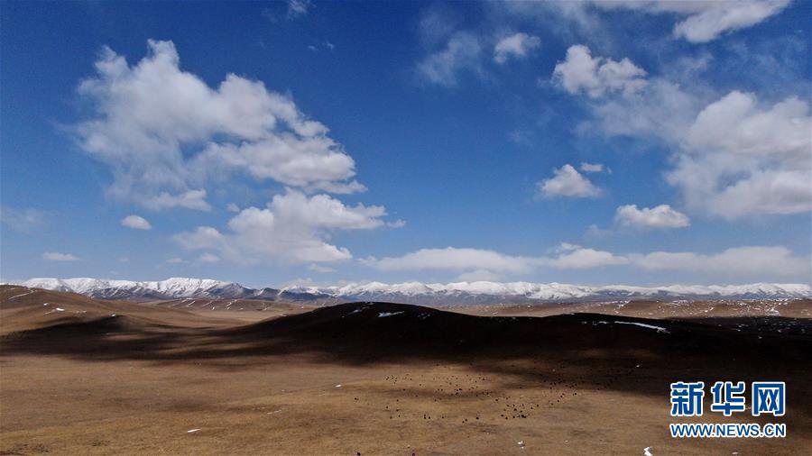 (环境)(2)雪后的金银滩草原