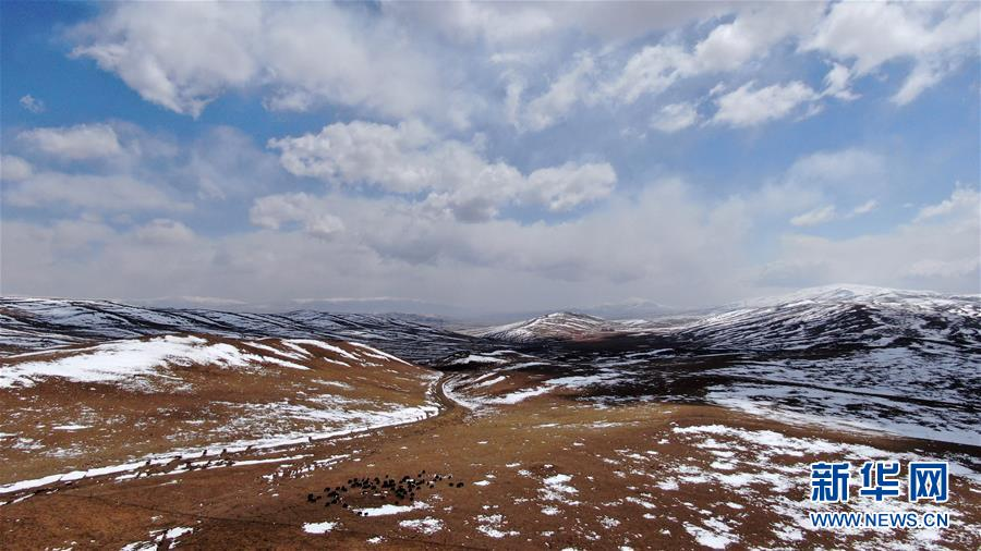 (环境)(4)雪后的金银滩草原