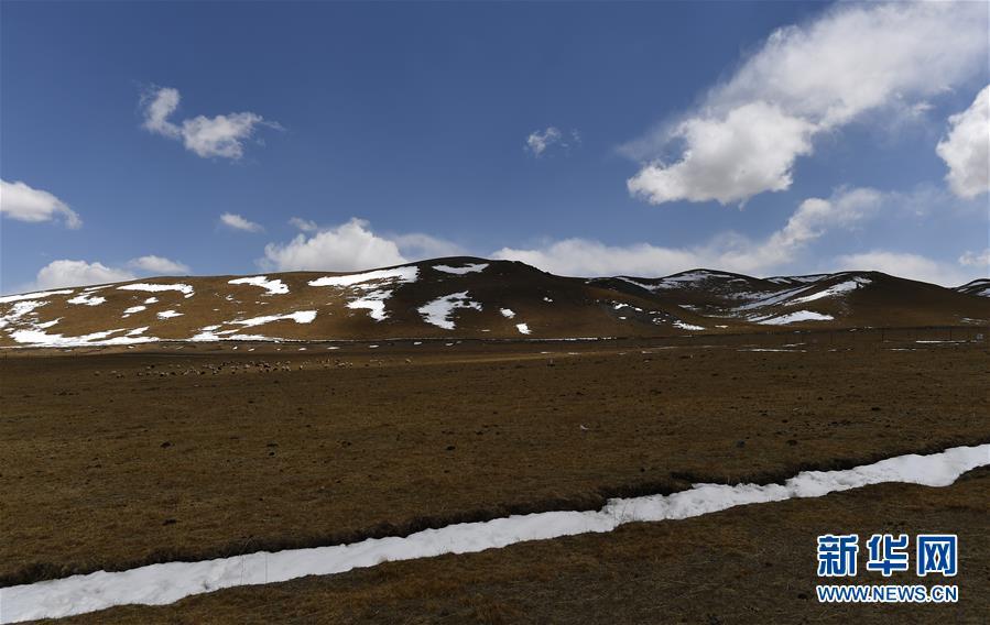 (环境)(5)雪后的金银滩草原