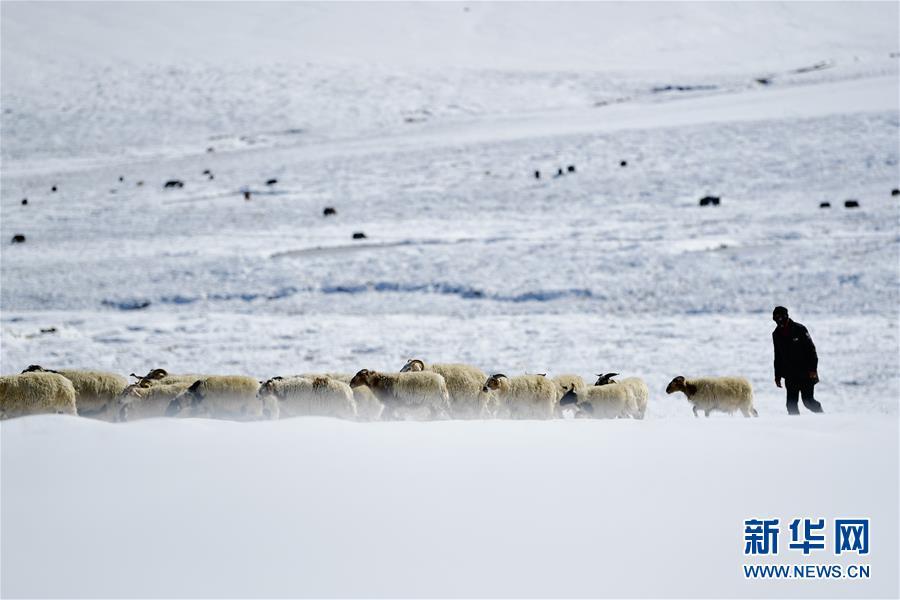 (社會)(1)雪後的嘉塘草原