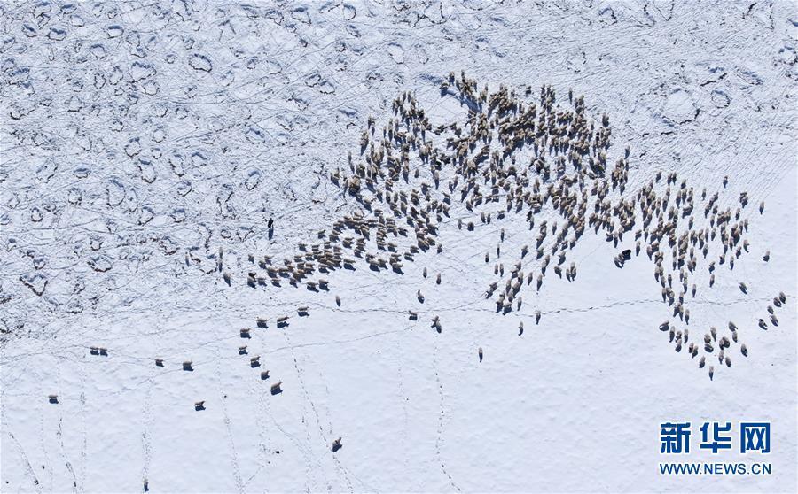 (社會)(2)雪後的嘉塘草原