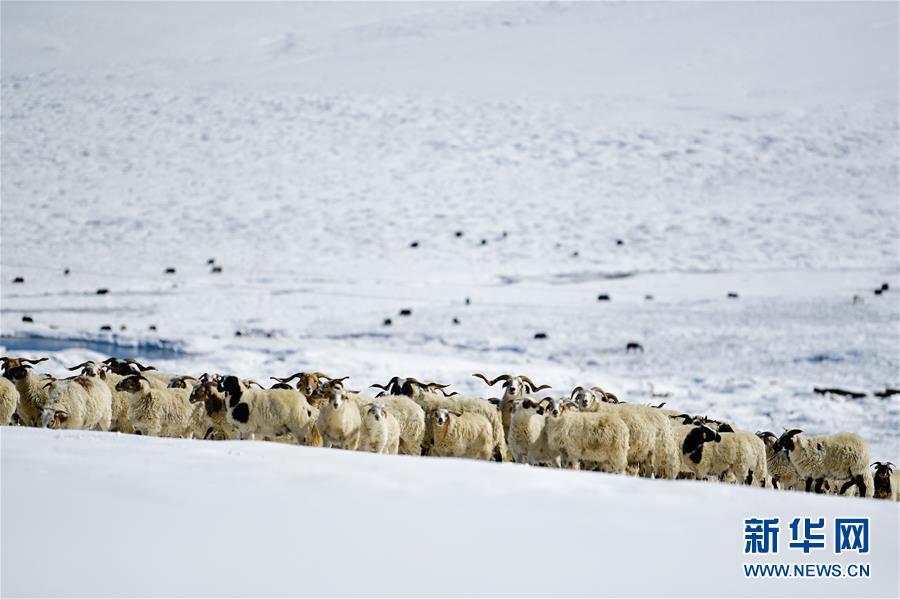 (社會)(3)雪後的嘉塘草原