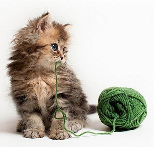 被誉最可爱猫咪