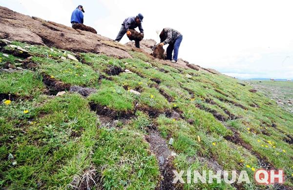 青藏高原多年冻土区首条高速公路加紧建设