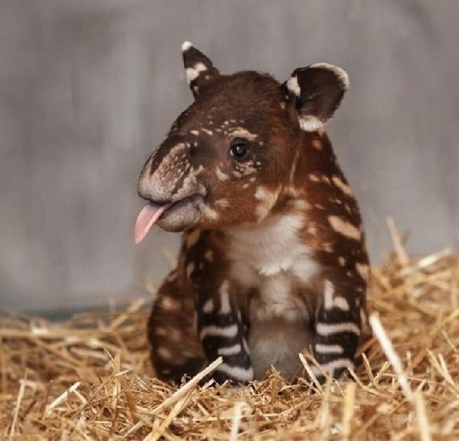 动物宝宝摄影尽显呆萌可爱