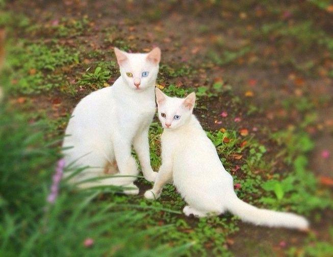 动物亲密温馨照展母子情深