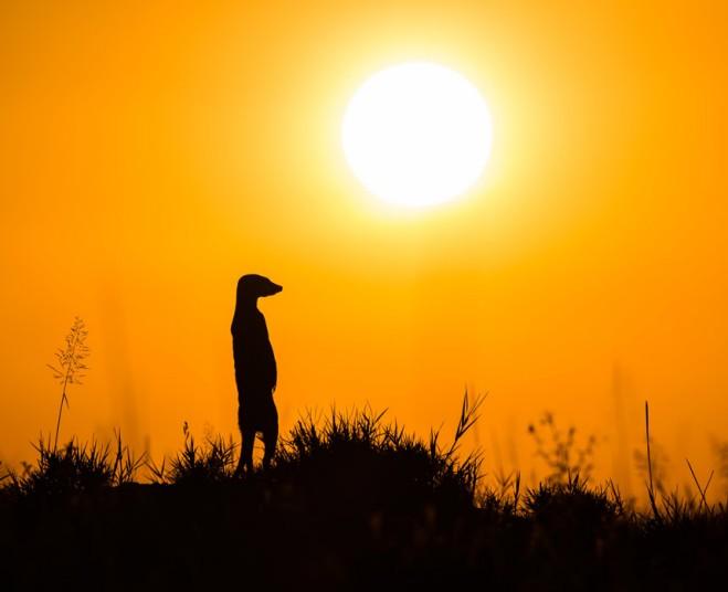 动物摄影师非洲近距离实拍萌物狐獴