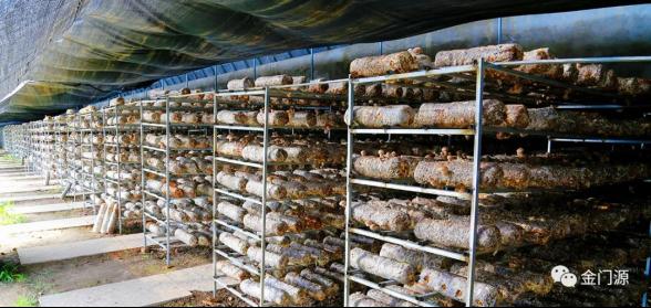 门源:打造全省最大香菇种植和精深加工基地