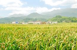 青海省扶贫开发工作领导小组会议召开
