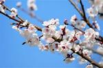 """不賞花何以談春天?來看看青海春日裏的""""花花""""世界"""