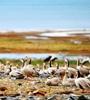 青海湖湿地生态恢复明显