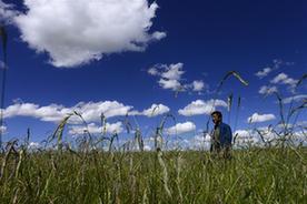 青海省牧草良种繁殖场迎来收获季