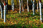 湟水森林公園裏尋秋天
