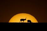 可可西裏:白天不懂夜的美