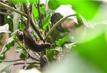 """【新(xin)春(chun)走基層】青海(hai)西寧︰現代農業di)奧ldquo;菜籃子"""" 妝點""""菜園子"""""""