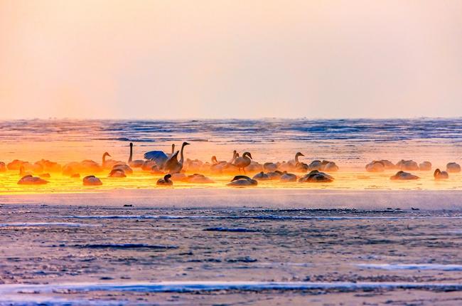 """親近青海湖,感受生靈之美丨""""保護青海湖·我們在行動""""線上攝影展(二)"""