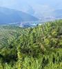 青海:绿树爬上荒山坡
