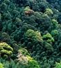 青海省持(chi)續開展大(da)規模造林,國土綠(lv)化面積進(jin)一步擴大(da),省東部地(di)區森林覆蓋率達32%高于全國平均(jun)水平