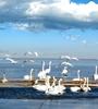 碧水蕩漾、海天一色(se),青海湖是游客追(zhui)隨的最(zui)美湖泊(bo),湖水周圍(wei)碧草青青,水鳥(niao)飛(fei)舞、青海湖生態環境越(yue)來越(yue)好(hao)。