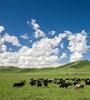 共同打造青藏高原生態環境保護工作機制三江源國家公園暨青新藏三省區國家級自然保護區聯盟工作會議在西寧召開。