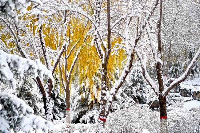落雪迎冬 青海西寧變身童話世界