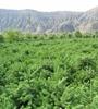 十八大(da)以來,青海省投資210億(yi)元,完(wan)成營造林850466.6公頃,義(yi)務植cai)500萬株(zhu),森林覆蓋率提高1個多百(bai)分點