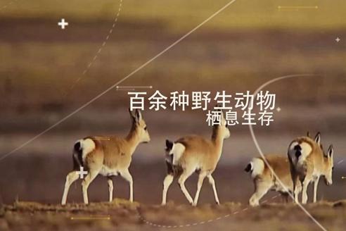 【走進三江源】對!這是自帶美顏濾鏡的三江源