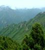 青海省對天然林保護工程tan)屑ㄐ 蘭郟 018年(nian)度森林管護工作進(jin)行了巡(xun)回監理,實現績效評價和監理工作的全覆蓋。