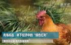 """青海(hai)祁連︰林下經濟中的""""綠色紅利(li)"""""""