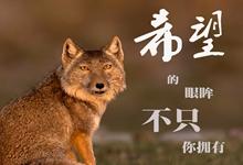 """這場戰""""疫(yi)"""",關乎你我(wo)!敬畏自然,尊重生命(一)"""