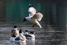 春日掠(lue)影 西寧市人民(min)公園魚鷗(ou)翩翩起舞
