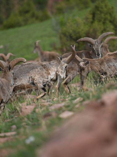 盛夏中的高原野生動物世界