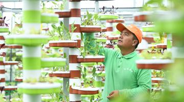 紅柳村:讓農村成為安居樂業的美麗家園