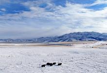 雪後的阿柔草原