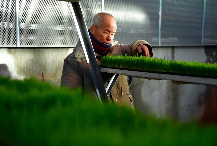 青海果洛:科技助力農牧業生産